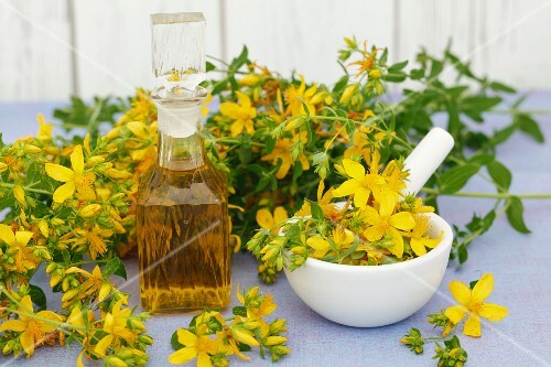 St. John's wort oil and fresh St. John's wort in flower