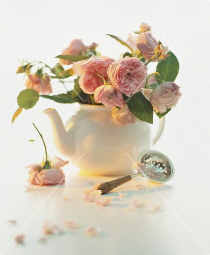A still life featuring pink roses in a teapot