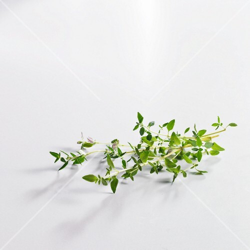 Fresh sprigs of thyme