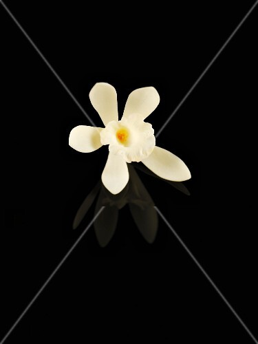 A vanilla flower against a black background
