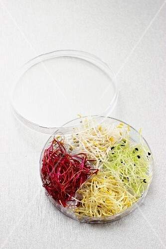 Assorted edible shoots in a glass bowl