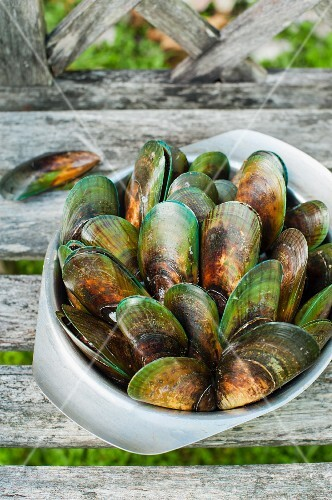 Fresh green-shelled mussels in a bowl