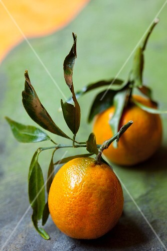 Two clementines with leaves