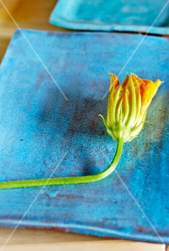 Courgette flower on a blue plate