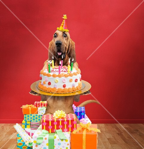 A dog with a birthday cake and birthday presents