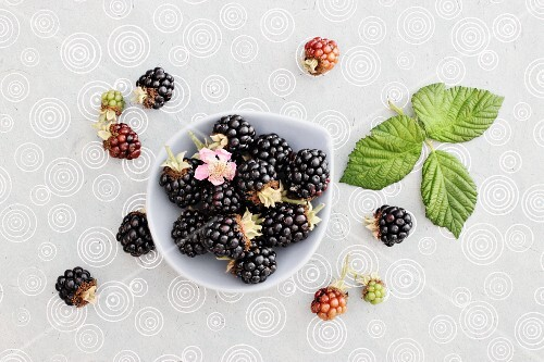 Blackberries with flowers and leaves