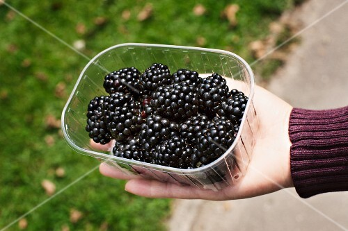 A punnet of fresh blackberries