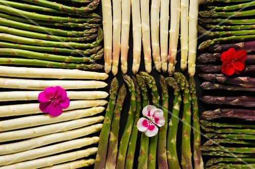 An arrangement of various different types of asparagus (seen from above)