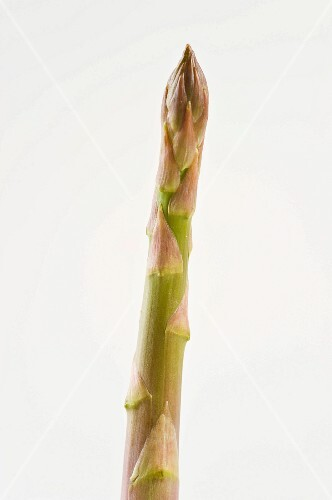 A spear of green asparagus against a white background