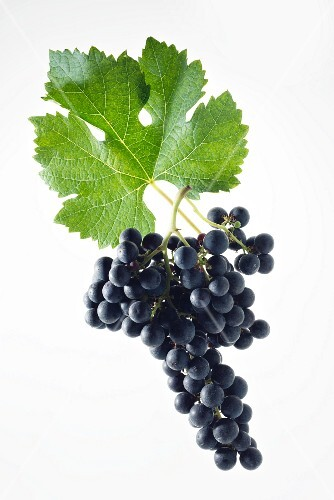 Merlot grapes with a vine leaf