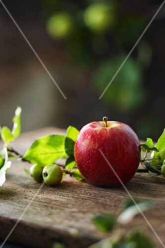 Fresh red apple and a sprig from an ornamental apple tree on a wooden board in a garden