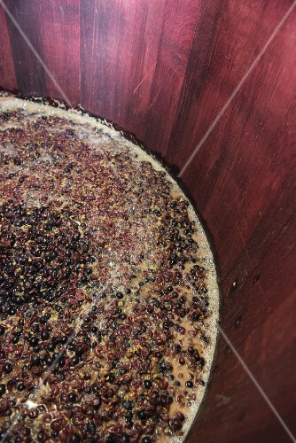 Red wine mash fermenting in an open wooden vat, lower Aaretal