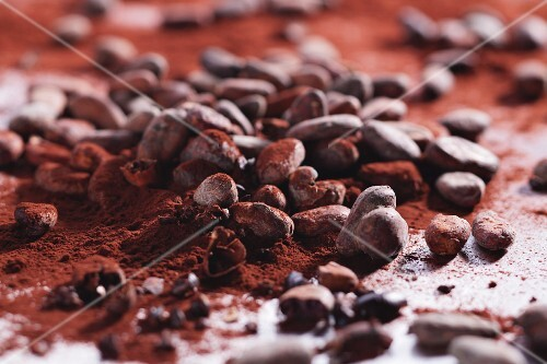 Cocoa powder and cocoa beans