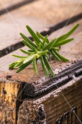 Rosemary on a rustic wooden table