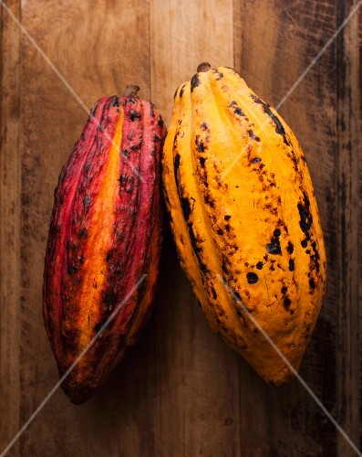 Two whole cocoa pods