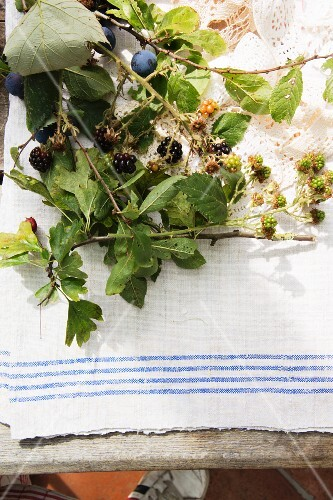 Sprigs of blackberries and sloes with leaves and fruit on a garden table