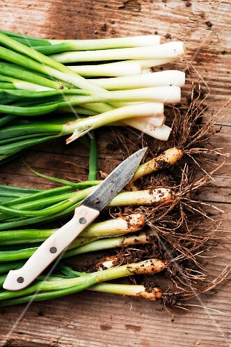 Fresh spring onions, some cleaned
