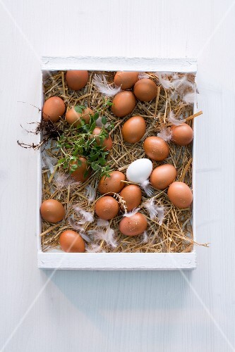 Fresh eggs on straw in a crate