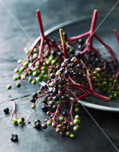 Unripe elderberries