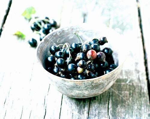 Black currants in a dish