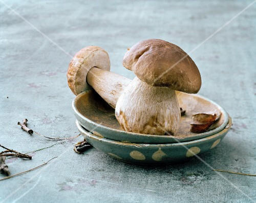Two porcini mushrooms in a spotted dish