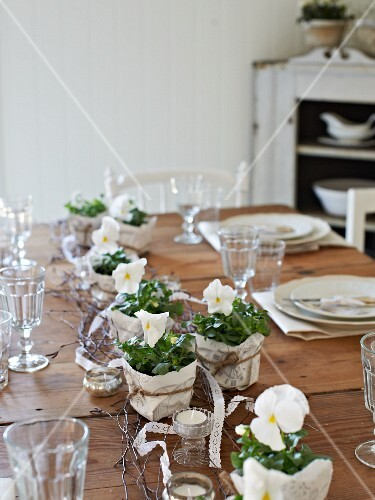 Wooden table set with white violas in kitchen
