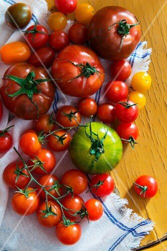 Various types of tomatoes on a tea towel