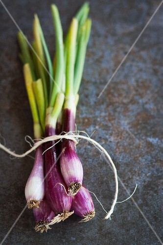 A bunch of organic red spring onions tied with twine