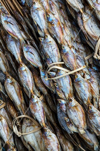Dried fish on bamboo (Thailand)