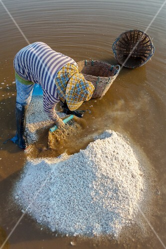 Salt being harvest in the Loei province (North-East Thailand)