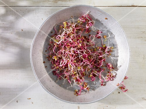 Red cabbage sprouts