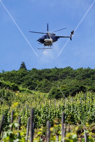 A helicopter spraying a vineyard, Rhineland Palatinate, Germany