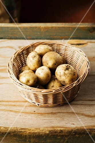 A basket of Pentland Javelin potatoes