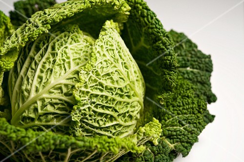 Savoy cabbage on a white surface