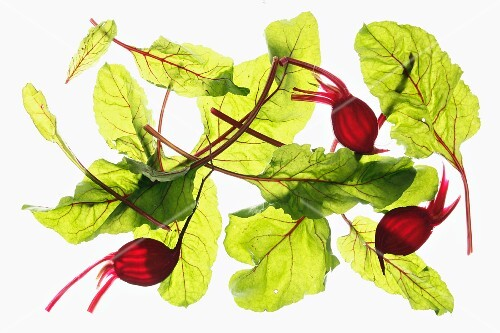 Back-lit slices of beetroot and beetroot leaves
