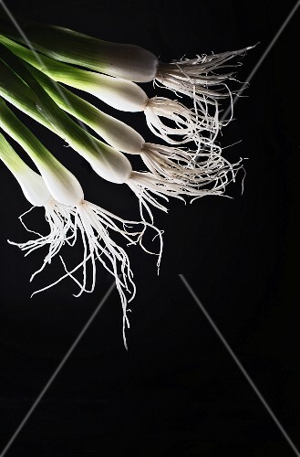 Back-lit spring onions