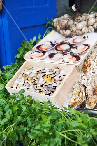 Clams and scallops at a market in Spain