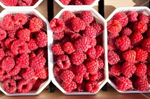 Raspberries in the sunshine