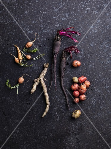 Various turnips and roots