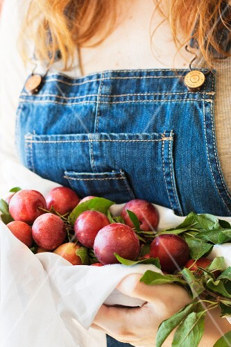 A woman wearing a pair of denim dungarees holding freshly picked red plums in a white cloth