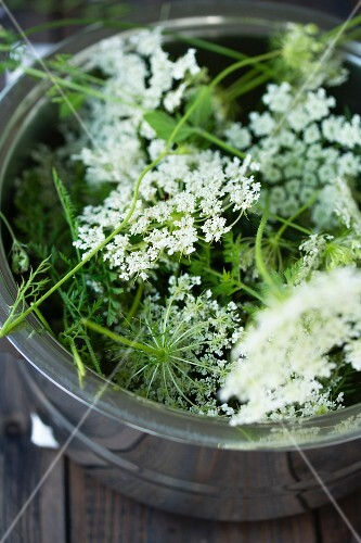 Wild carrot flowers in a pot (ingredient for smoothies)