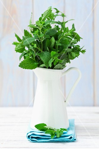 Fresh lemon balm in a jug