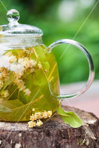 Linden blossom tea in a glass teapot