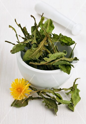 Whole dried dandelion leaves in a mortar for making dandelion tea