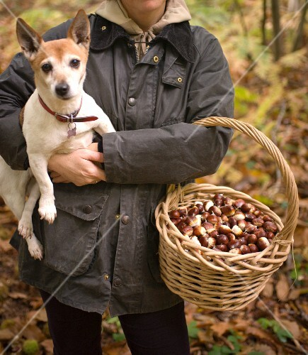 A woman with a dog and a basket of edible chestnuts in a forest