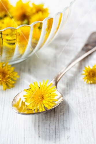 Dandelion flowers on a spoon and in a bowl with some next to it
