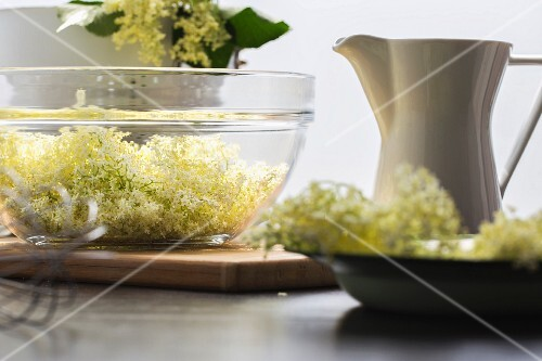 Ingredients for elderflower syrup: elderflowers and sugar water
