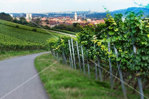 A view over Würzburg from a vineyard