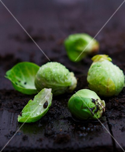 Wet Brussels sprouts with soil