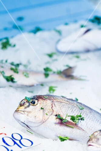 Fresh porgy with herbs